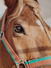 Close Up Of A Brown Horse Head
