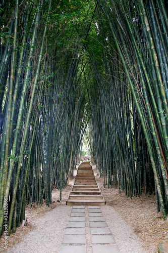 Crystal Castle Bamboo Walk, Byron Bay, New South Wales, Australia in the Hinterl Canvas Print