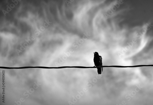 Photo Black bird is perched on a wire against a swirling cloudy sky in black and white