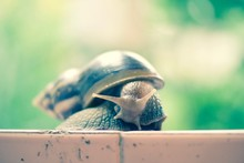 Close-up Of Snail On Wall