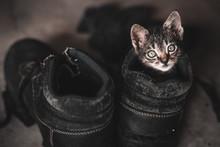 High Angle Portrait Of Kitten In Shoe