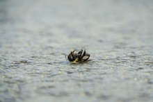 Selective Focus Shot Of A Dead Bee On The Stone Ground