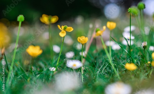 Closeup shot of beautiful yellow buttercup flowers in a field