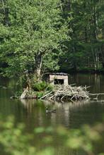 Eau Environnement Etang Lac Ve...