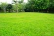 Leinwandbild Motiv green grass and trees