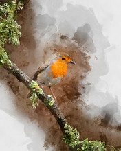 Digitally Created Watercolor Painting Of Stunning Image Of Robin Red Breast Bird Erithacus Rubecula On Branch In Spring Sunshine