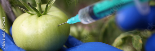 Close-up of scientist injecting transparent chemicals into green tomato wearing protective gloves Canvas Print