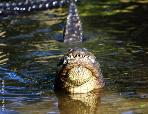 Close-up Of Alligator Bellowing In Lake Canvas Print