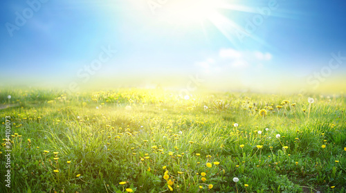 Fotografia Beautiful meadow field with fresh grass and yellow dandelion flowers in nature against a blurry blue sky with clouds