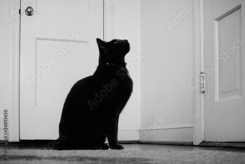 Side View Of Black Cat Sitting By Door Looking Up - fototapety na wymiar