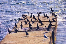 High Angle View Of Cormorants ...