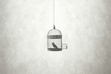 Freedom Minimal Concept, Bird In An Open Cage