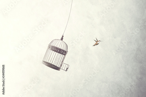 Photo little bird flying out of a birdcage
