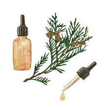 Essential Oil Of Cypress Or Th...