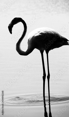 Fotografia, Obraz Flamingo Standing On Lake