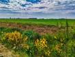 canvas print picture - Flemish landscape.