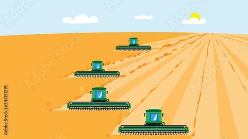 4 combine harvesters mow wheat crop Canvas Print