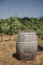 Tonneau De Vin Dans Les Vignes...