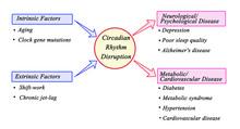 Circadian  Rhythm Disruption: ...