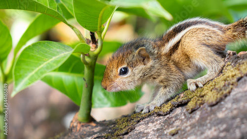 Photo Hungry little Baby squirrel looking afraid