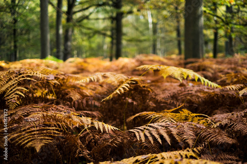 Photo Landscape of yellow and orange ferns announcing autumn in France