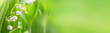 Leinwandbild Motiv Lily of the valley flowers on green background  -  Banner, panorama, header for mothers day, springtime and other