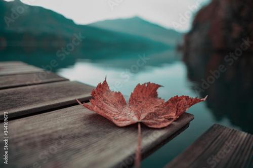 Photo un feuille un calme matin au bord du lac de gruyère