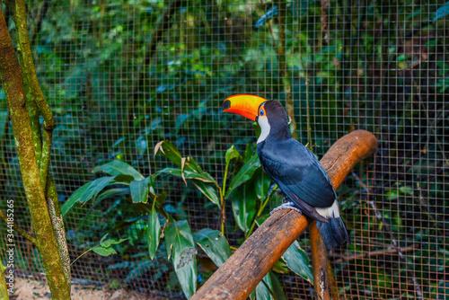 Photo toucan on a branch zoo animal photo amazonia