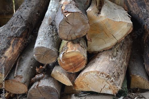 Obraz drewna, drewno na opał, dzienniki, dzienniki, drewno, drzew, pryzma, stos, bory, ciąć, charakter, ogień, graty, drewniane, kora, braun, bagażnik, koks, drzew, ciepło, woodpile, tekstura, sosna, energe - fototapety do salonu