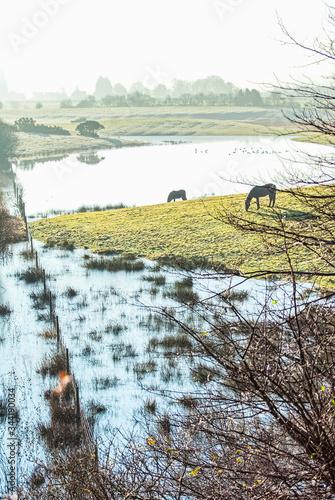 Fotografija two brown ponies on marshland grass, near a river UK