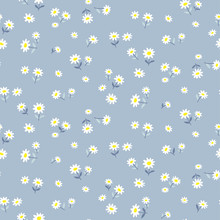 Daisy Seamless Pattern. Vector Floral Background