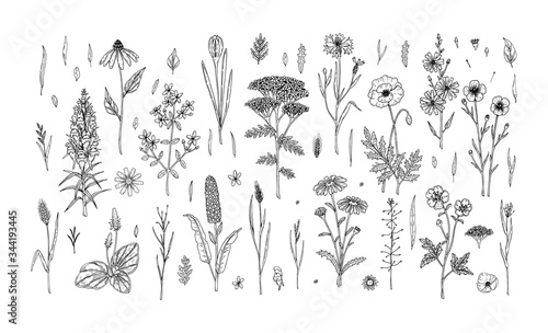 Fototapeta Set of hand drawn meadow flowers and herbs isolated on white. Vector illustration in sketch style obraz