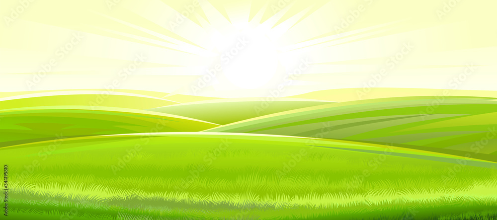 Fototapeta Sunny rural landscape. Vector. Green meadows and fields, grassy hills flooded with bright rays of sunlight. Ripe juicy grass. Summer, spring morning.