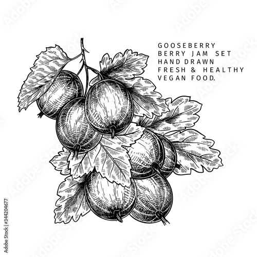 Hand drawn gooseberry branch, leaf and berry Fototapeta