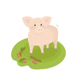 Cute cartoon pig with acorns and oak leaves on green grass. Vector hand drawn illustration.