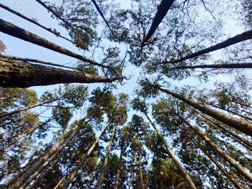 Foto Low Angle View Of Trees In Forest Against Sky