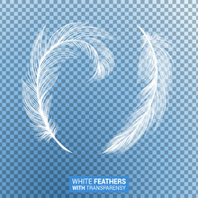 Feathers, White Fluffy Isolate...