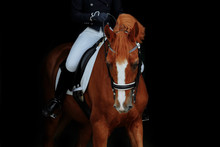 Red Dressage Horse Of Pure Bre...