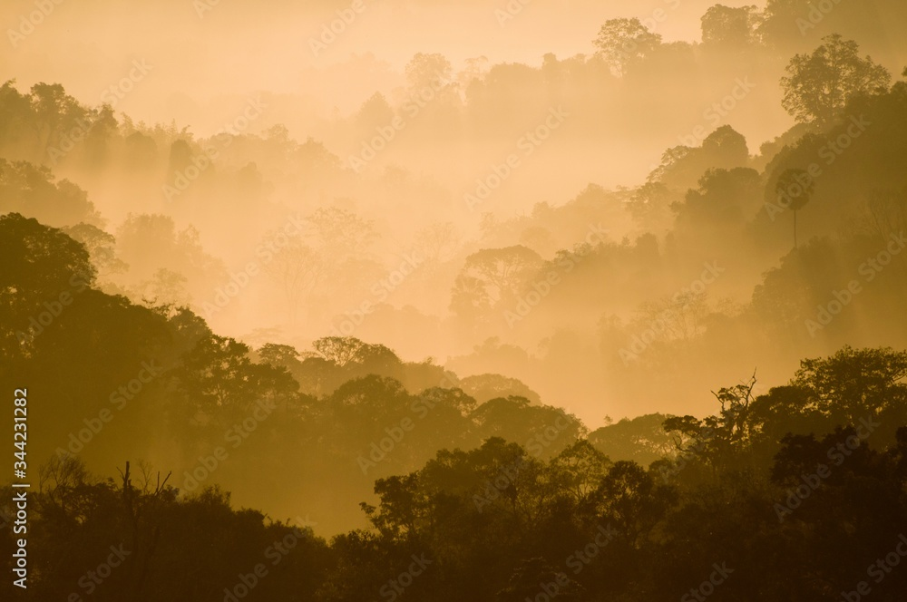 Scenic View Of Trees Growing At Forest During Foggy Weather