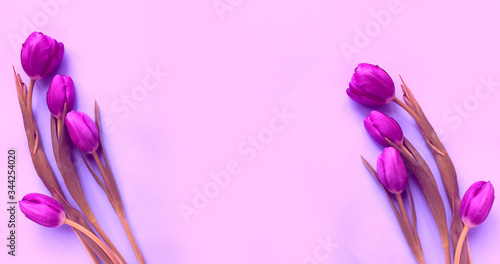 Fototapety, obrazy: Purple tulips on a light pink background. Background for a holiday card. Pastel color.