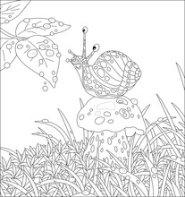 Funny Garden Snail With A Beautiful Spotted Shell, Sitting On A Big Mushroom Among Grass On A Forest Glade, Friendly Smiling And Playing With Rain Drops, Vector Cartoon Illustration