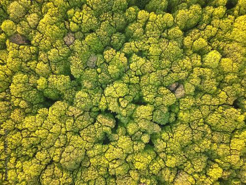 Fototapeta Aerial view spring forest