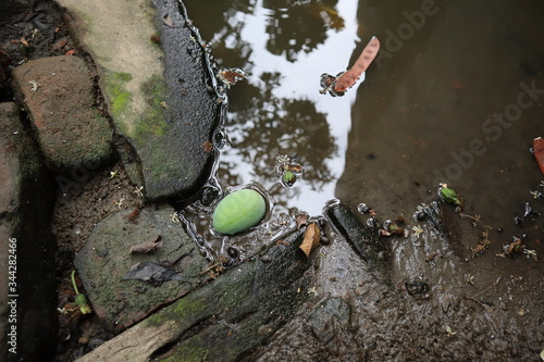 A small mango in a damp place along the countryside road in its stagnant water Wallpaper Mural