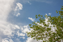 Wispy Clouds In Blue Sky With Green Tree Growing Above Background