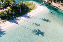 View Of Palm Tree Shadow Silho...