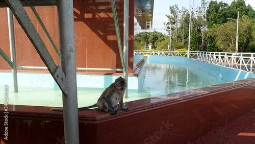 Photo un singe à Grand Bassin