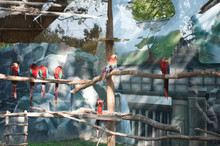 A Flock Of Macaws Behind The G...