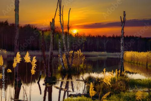 Fototapeta Zachód słońca na moczarach obraz