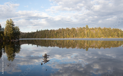 A log floats in Smoke Lake in Algonquin Park Ontario with evergreens and sky ref Canvas Print