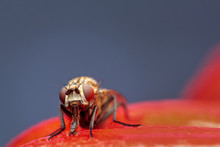 Closeup Of A Fly In The Garden
